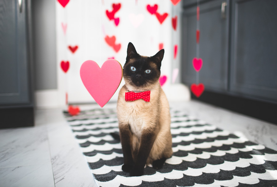 Happy Valentine's Day from Professsor