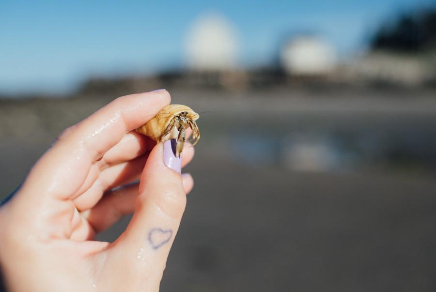 hermit crab found at Willard Beach