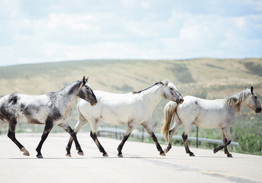 wild horses in superior, wyoming