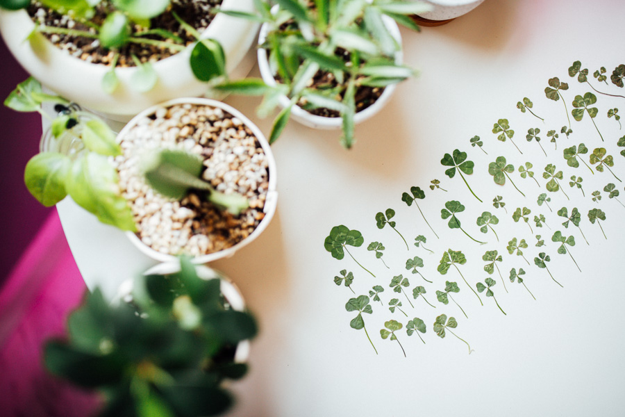 four leaf clover collection